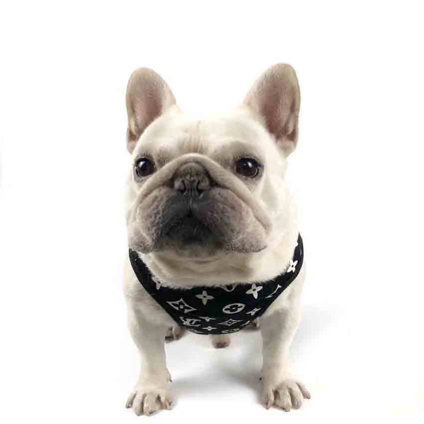 シュプリーム 犬服 シャツ